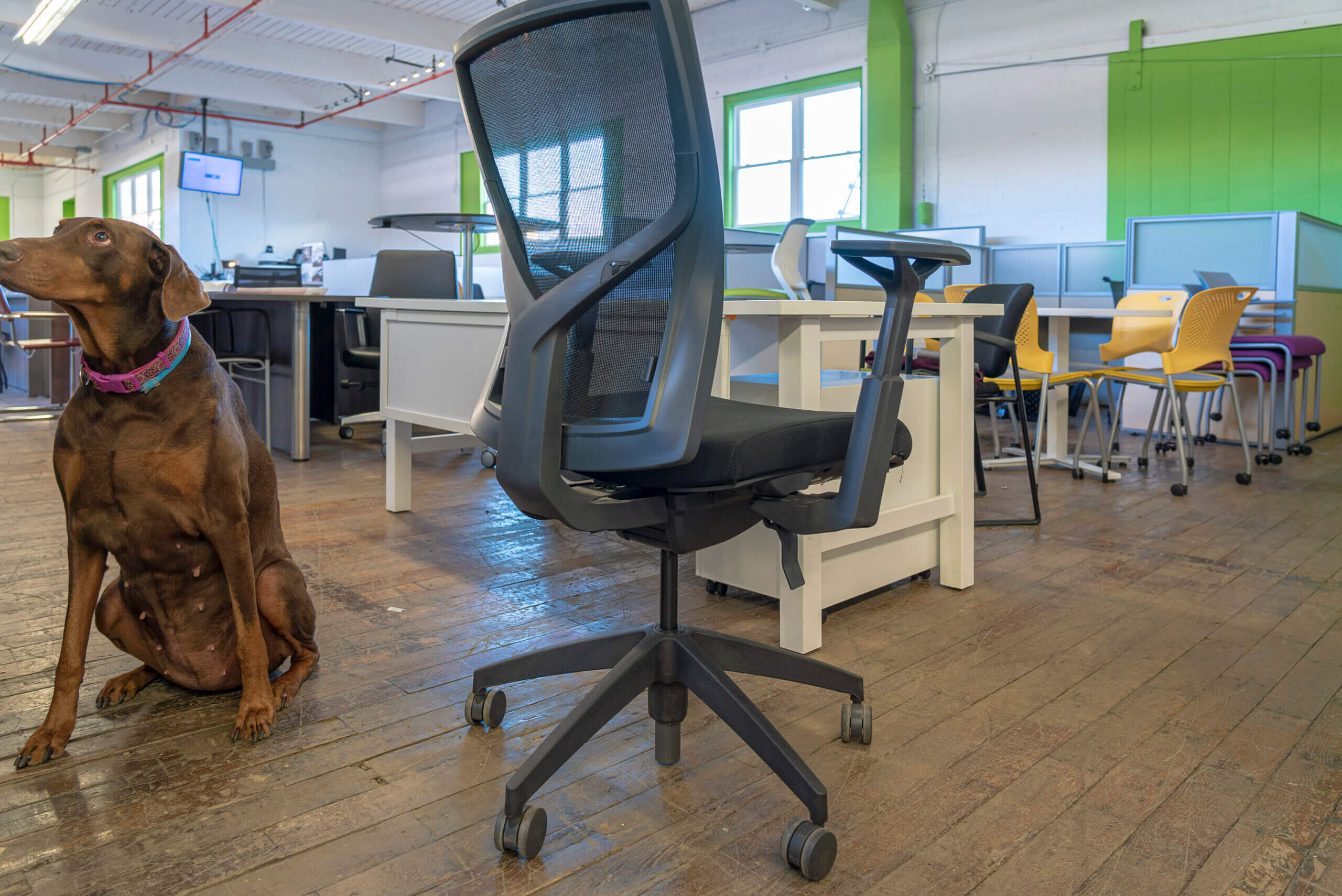 sitonit-torsa-task-chairs